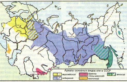 Где растет пихта в россии